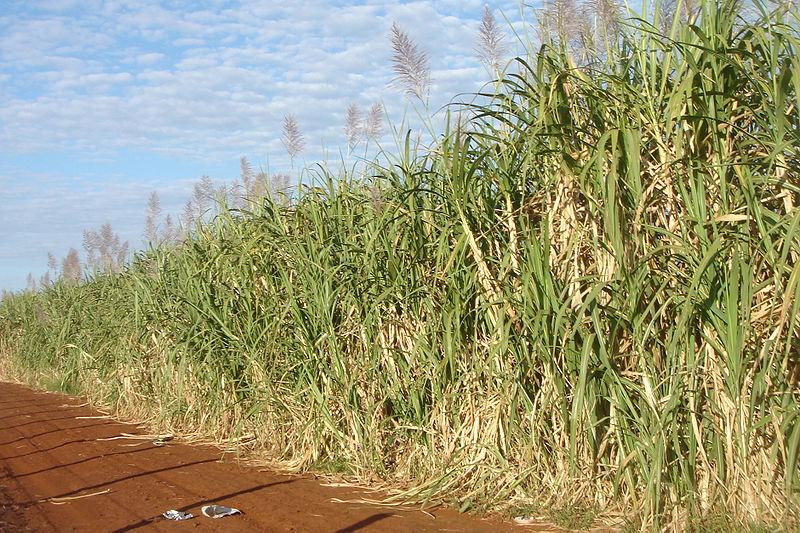 Biocombustibles y ambienteII
