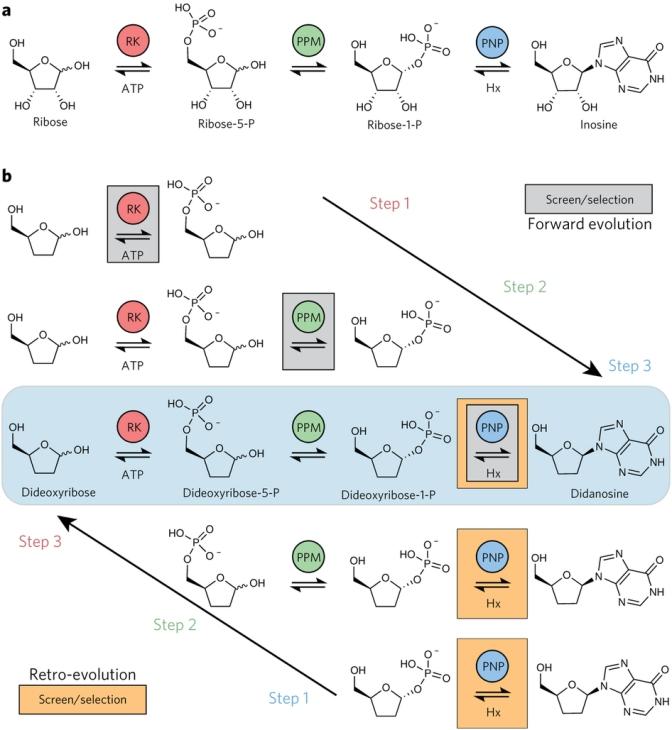 Cápsula biotecnológica: biorretrosintésis y fábricas microbianas