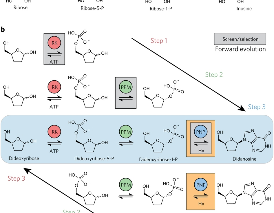 Cápsula biotecnológica: biorretrosintésis y fábricasmicrobianas